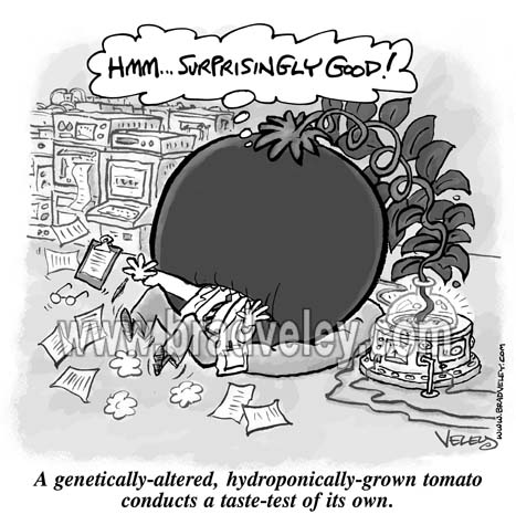 GMO Tomato Has Own Taste-Test